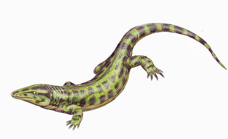 Solenodonsaurus janenschi