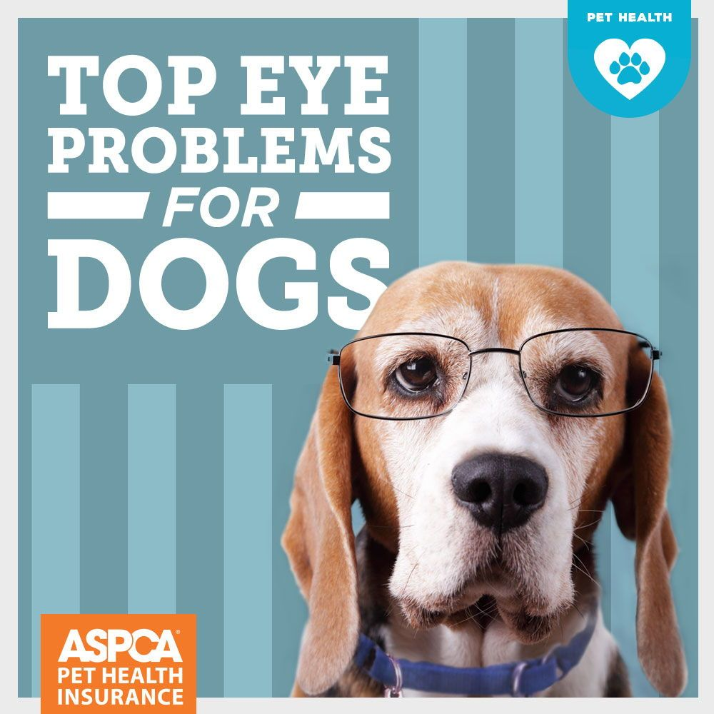 Top Eye Problems for Dogs Eyes problems, Pet insurance