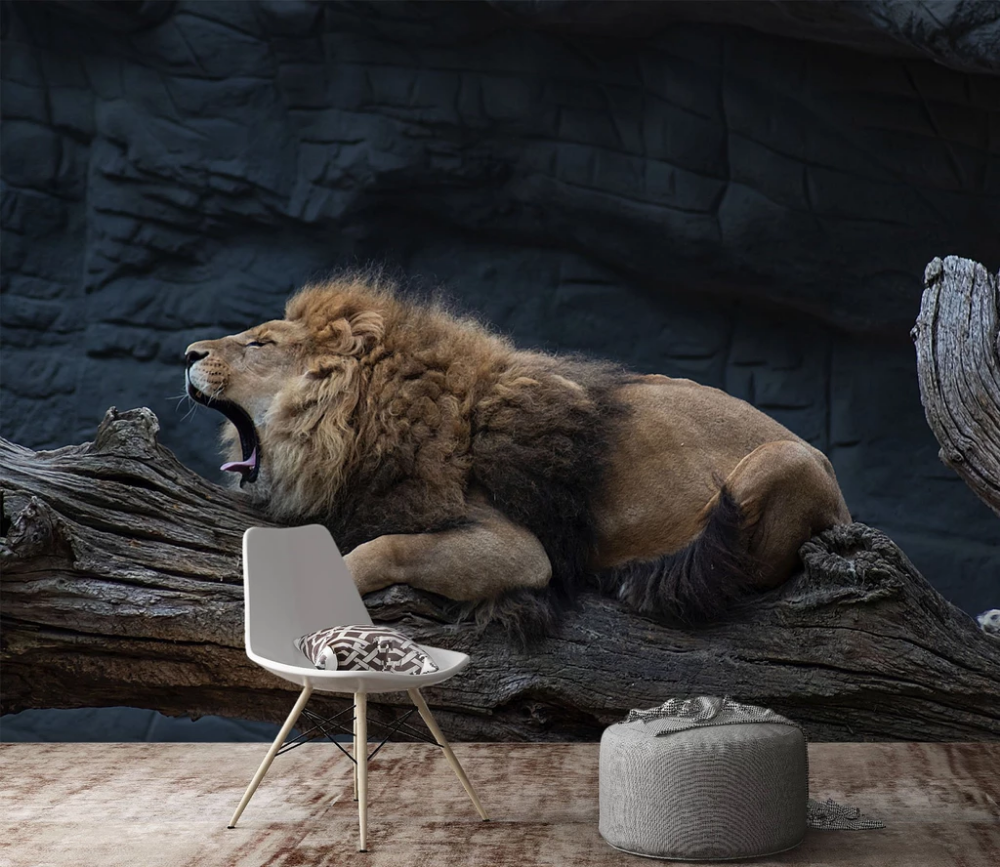 3D Dozing Lion 213 Wall art wallpaper, Wall murals
