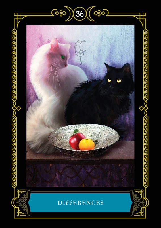 Differences Colette Baron Reid Oracle Cards Founder Of Oracle School House Of Night Oracle Cards Tarot Decks