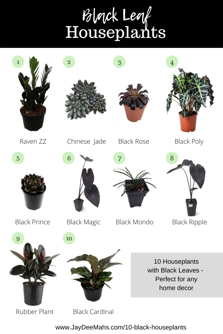 10 Black Houseplants Perfect For Any Home Decor is part of Plants, Indoor plants, House plant care, House plants indoor, Indoor plant care, Gothic garden - Black plants can be slightly harder to find than your typical green houseplants  but no worries! I've put this list together for you of my favorite black plants  Enjoy!