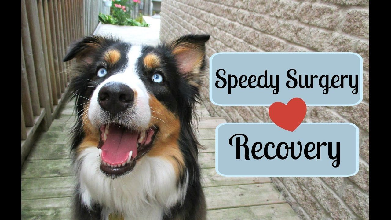 Tips For A Speedy Recovery From Surgery Dog Cat Life With Aspen Cats For Sale Cat Seat Surgery