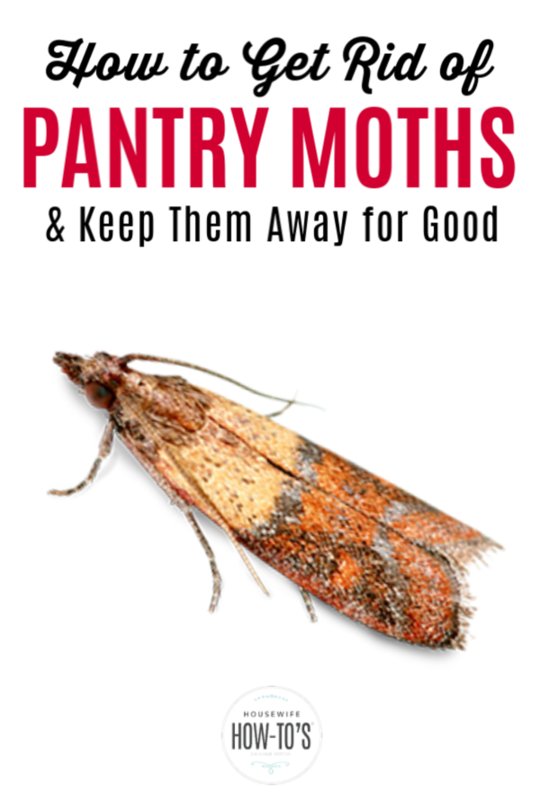 How To Get Rid Of Pantry Moths For Good Pantry Moths Pantry Moth Larvae Moth