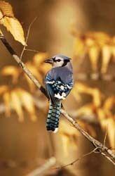 Asheville Birdlist Asheville Nc Wild Birds Unlimited Asheville Nature