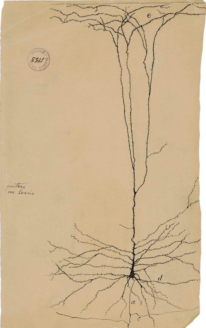 Santiago Ramón y Cajal- Descripción de una Neurona