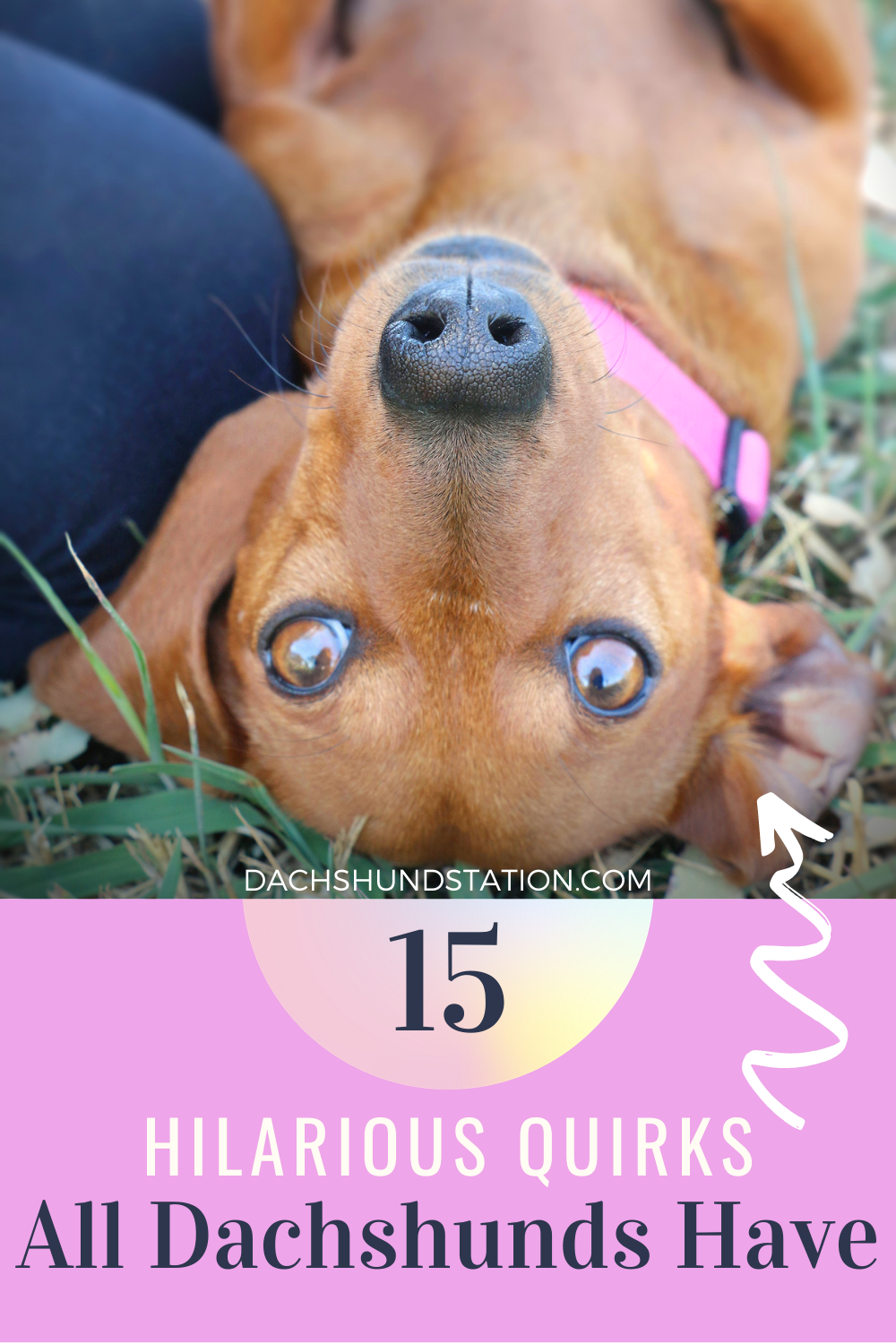 15 Hilarious Things Only Dachshund Owners Understand Dachshund Station In 2020 Puppy Dog Pictures Dachshund Dachshund Training