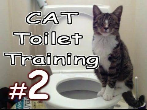 Youtube Cat Training Cat Toilet Training Toilet Training
