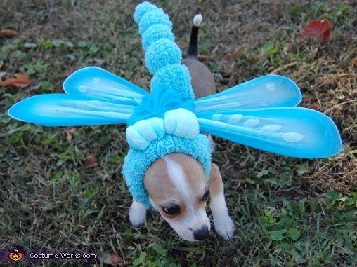 Blue Dasher Dragonfly - Halloween Costume Contest at Costume-Works.com & Blue Dasher Dragonfly - Halloween Costume Contest at Costume-Works ...