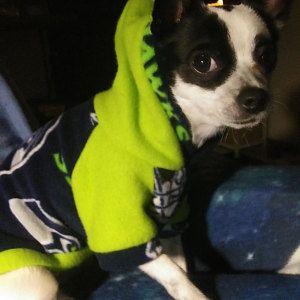 Photo of Häkelschal Small Dog, Halswärmer PINK Colors für die meisten S- oder M-Hunde