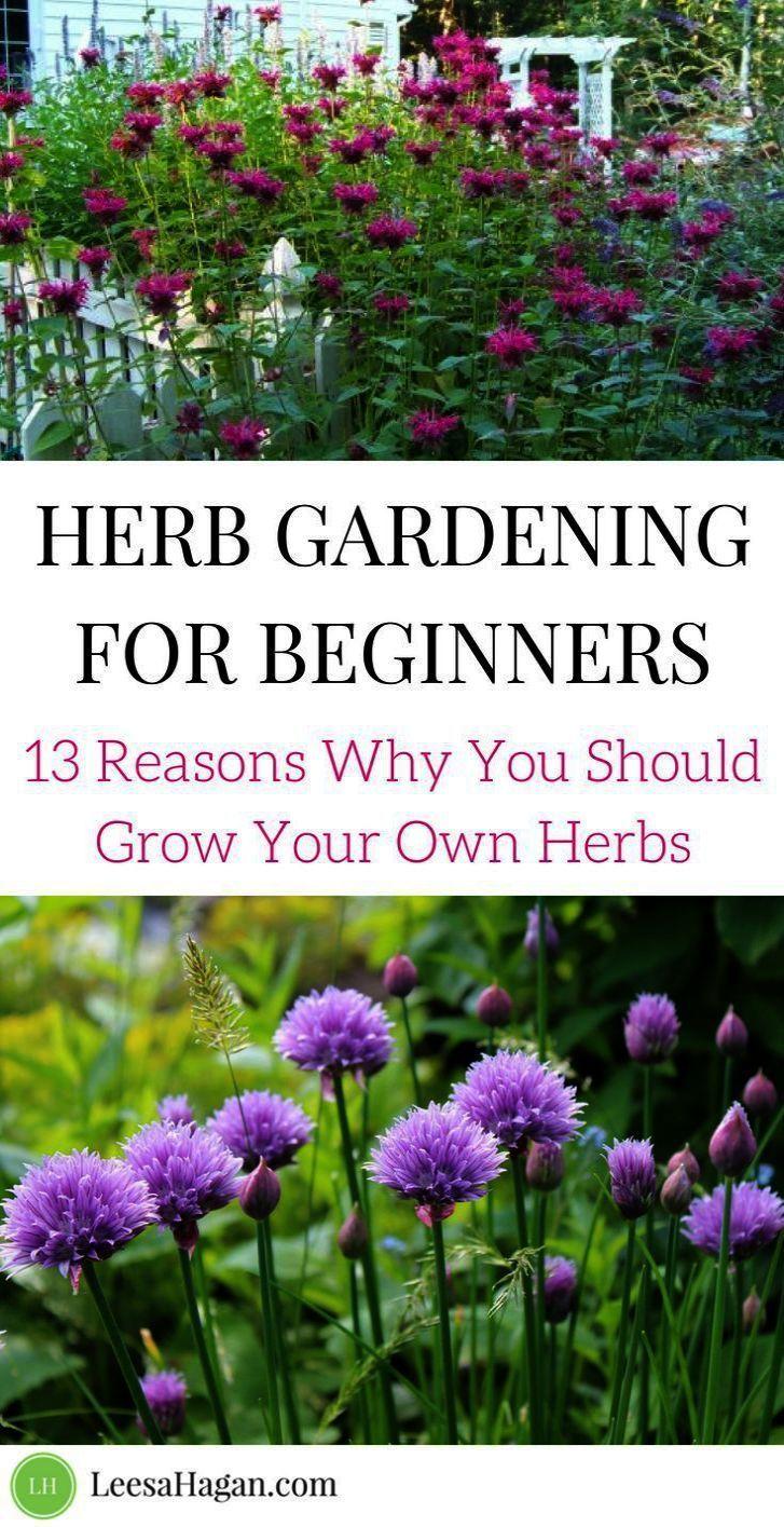 Vegetable Garden For Beginners Layout & Best Vegetable ...