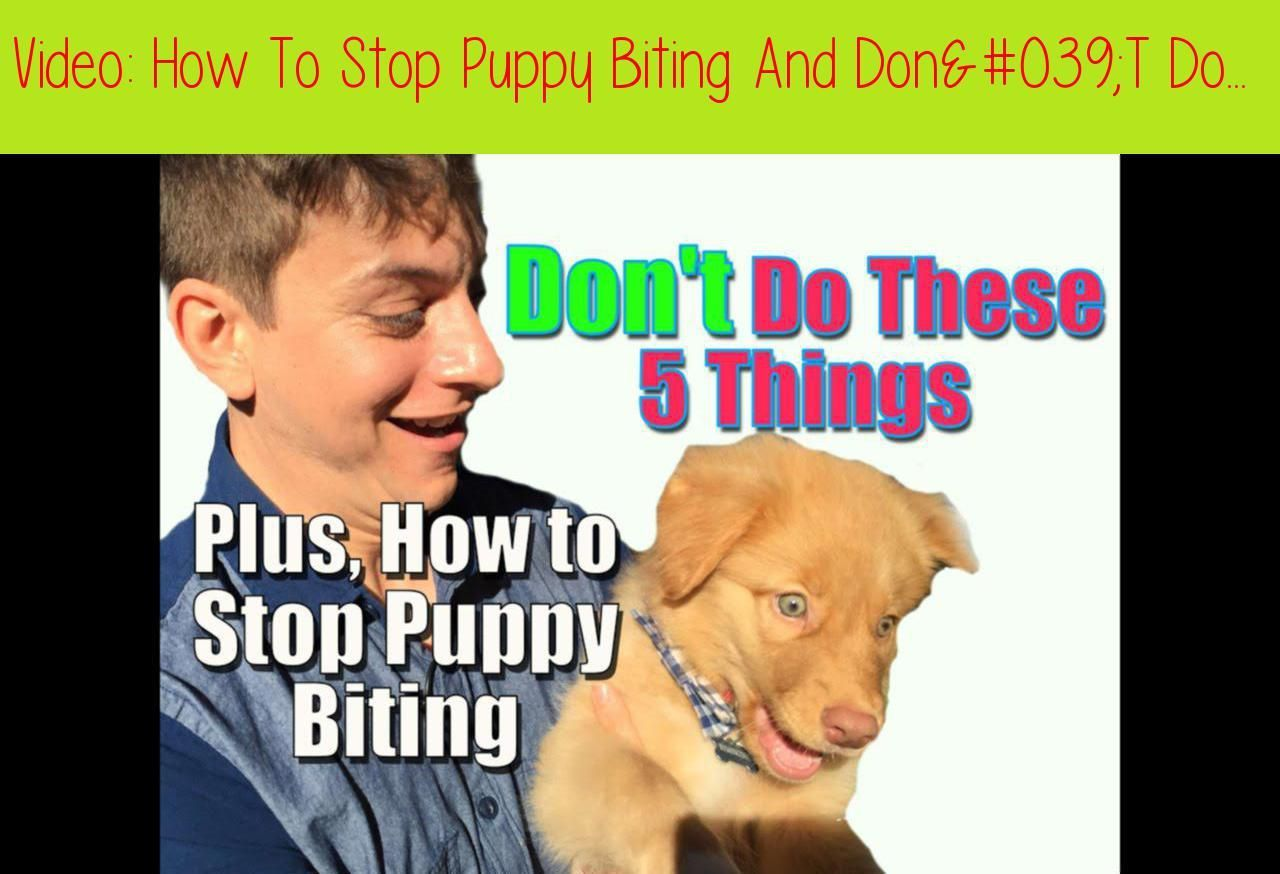 10 Pro Tips for Dog Training by Experts Puppy biting