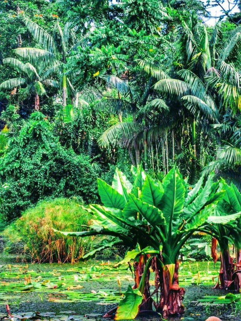 Botanic Gardens Bogor Indonesia (mit Bildern) Wasser