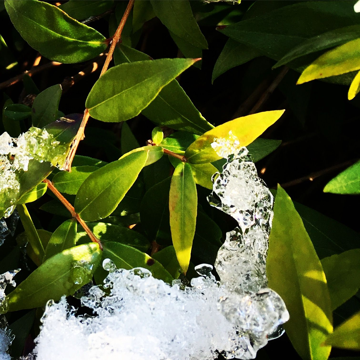 Ice-water #snow #ice #water