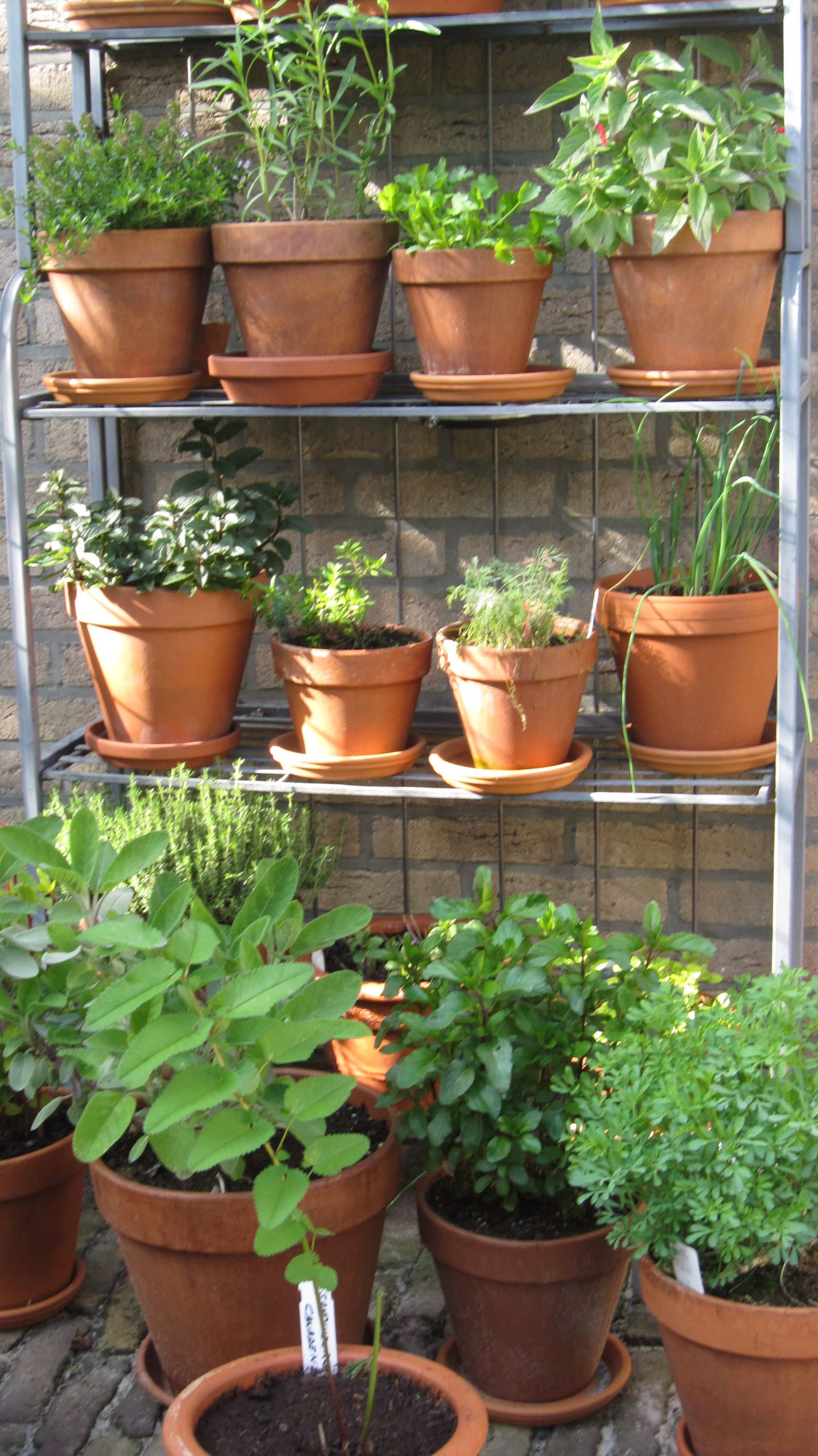 Mini Laghetto Per Terrazzo mijn kruidenrek (met afbeeldingen) | tuin ideeën, tuin, groen