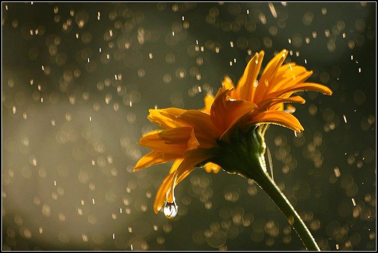 in the rain...via Flower Story