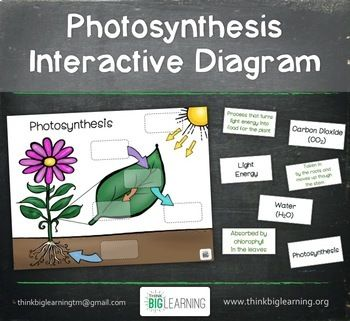 Interactive diagram of photosynthesis diy enthusiasts wiring photosynthesis interactive diagram task cards assessment page rh pinterest com photosynthesis and cellular respiration venn diagram photosynthesis and ccuart Gallery