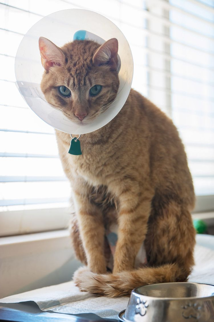 Third Cat In 6 Months Infected With Plague In Wyoming People