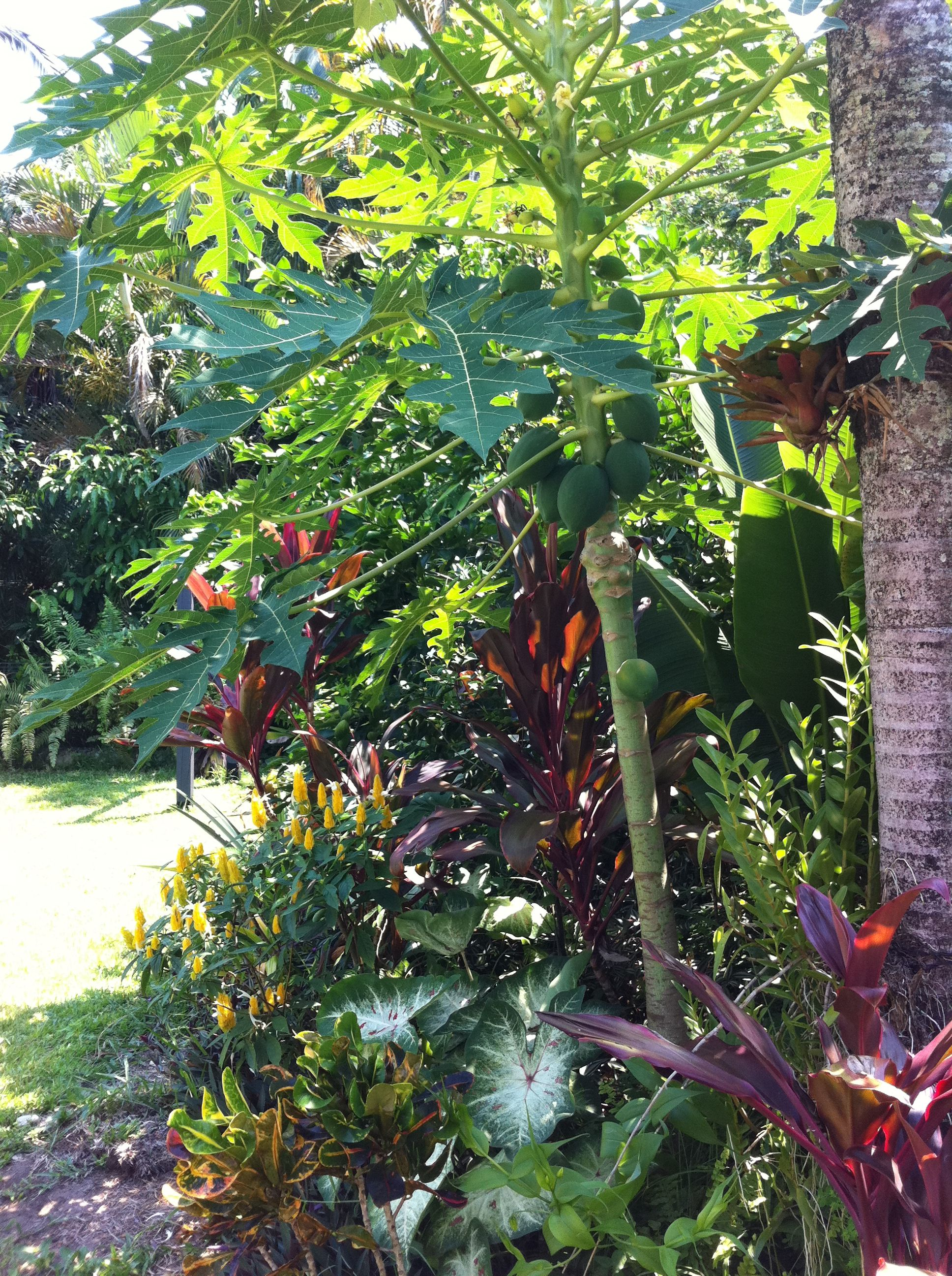 yes a tropical garden is a heaven even if there is no design