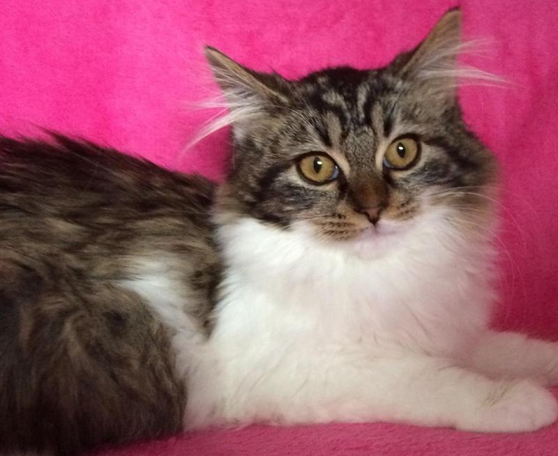 Adopt Amelia on Petfinder Pet adoption, Pets, I love cats