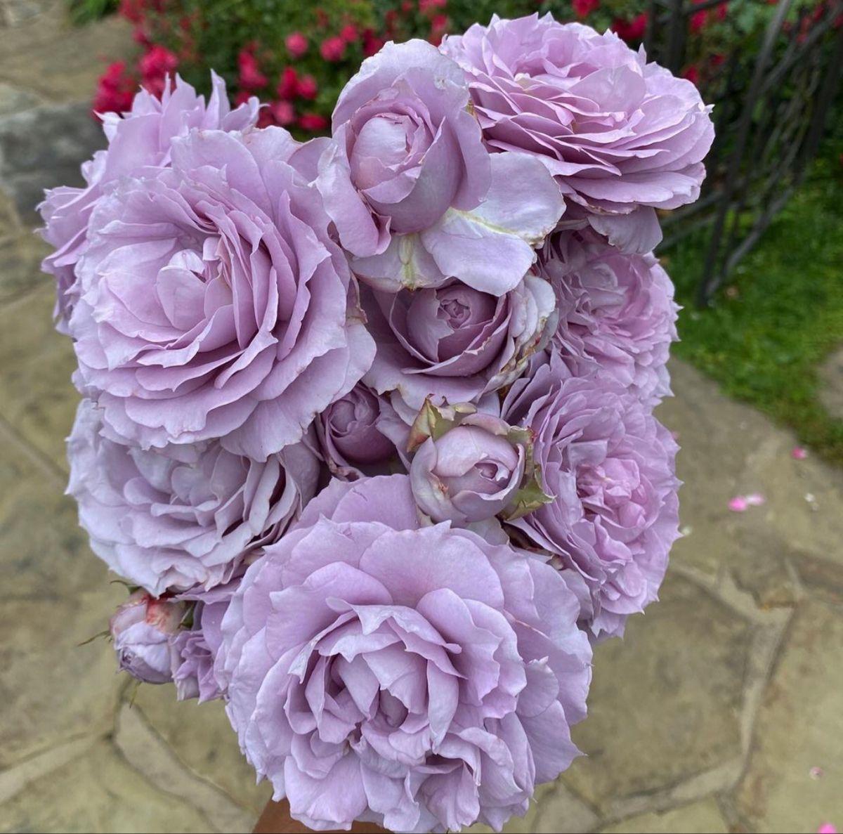 Lavender Garden Roses In 2020 Wholesale Flowers Lavender Roses Lavender Flowers