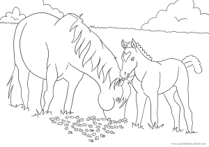 Ausmalbilder Pferde Und Ponys Mit Fohlen Vorlagen
