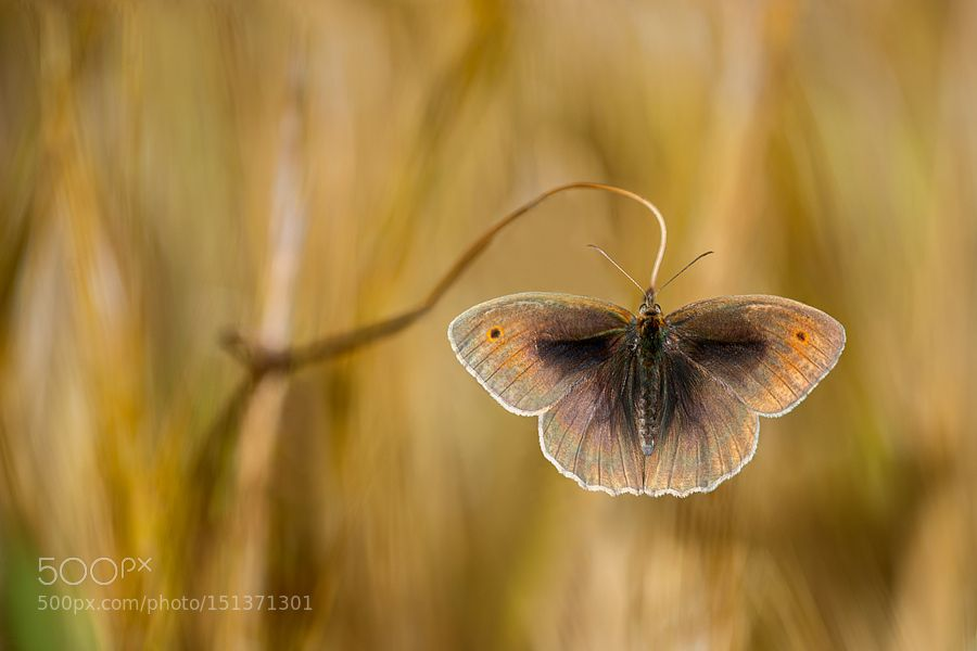 Wings of grass by luigichiriaco Macro Photography #InfluentialLime