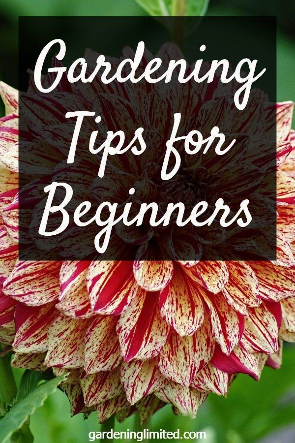 Do you want to start a garden but not sure what to do first Get some great tips for beginner Do you want to start a garden but not sure what to do first Get some great ti...
