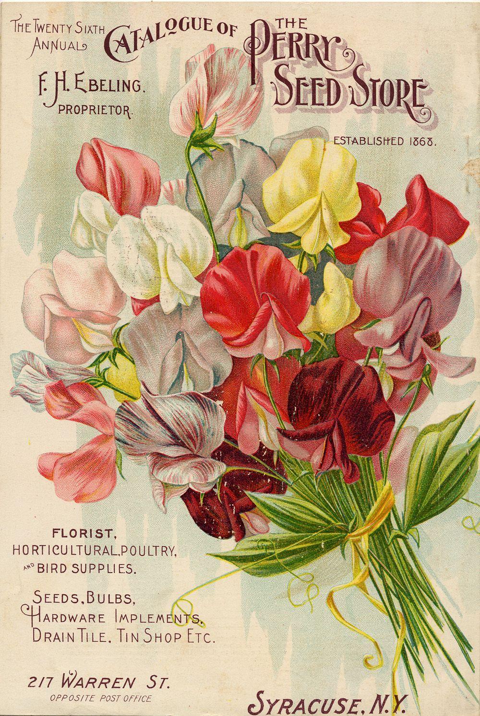 seed packet #printables #ephemera, vintage flower, illustratation, floral, seed, packet
