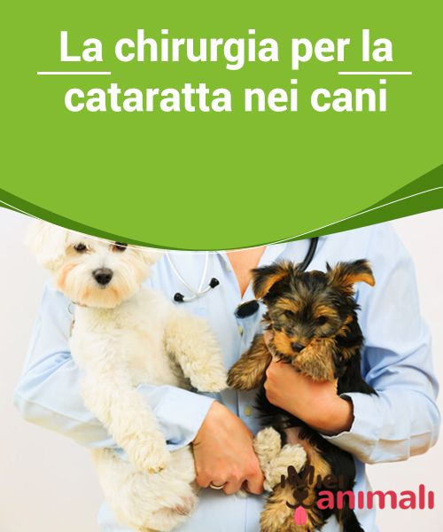 Cataratta nei cani, cos'è e come si cura - LifeGate