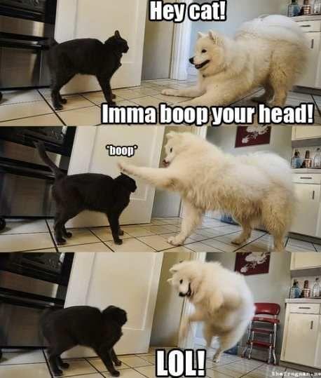 Hey cat, Imma boop your head