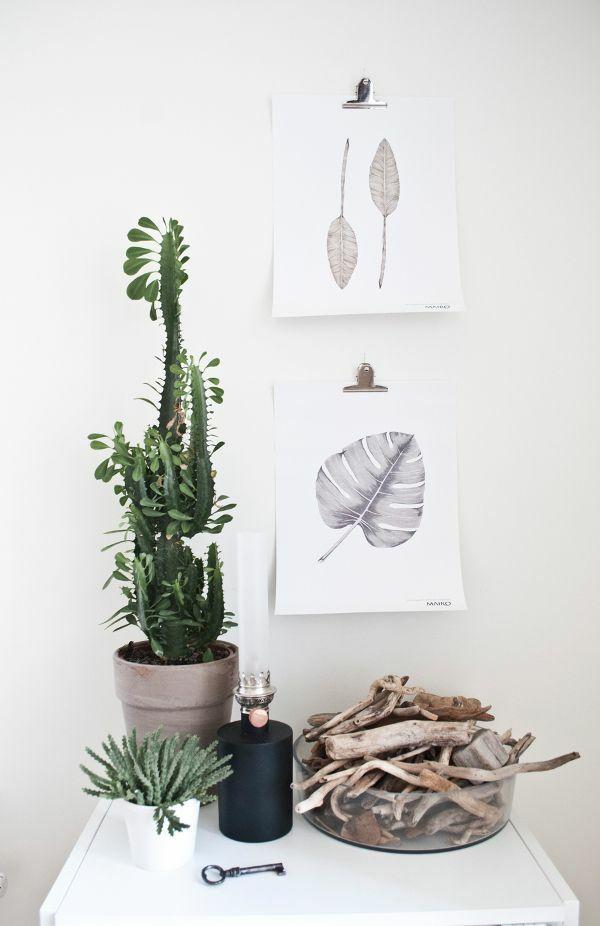 Sch ne zimmerpflanzen bilder so k nnen sie ihre wohnung for Zimmerpflanzen wohnzimmer