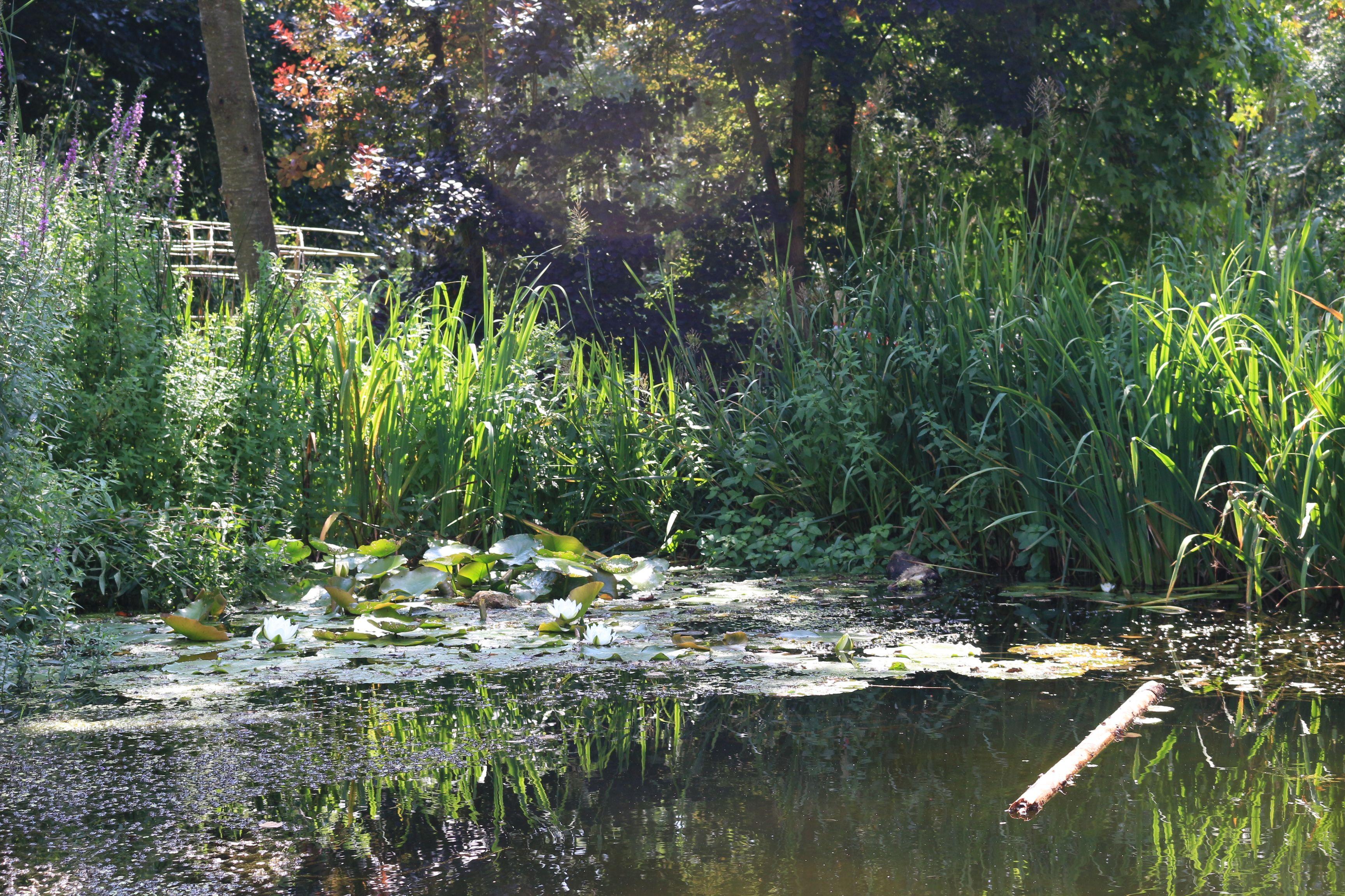 La mare des Classes de forêt accueille les grenouilles et leurs têtards à la belle saison.