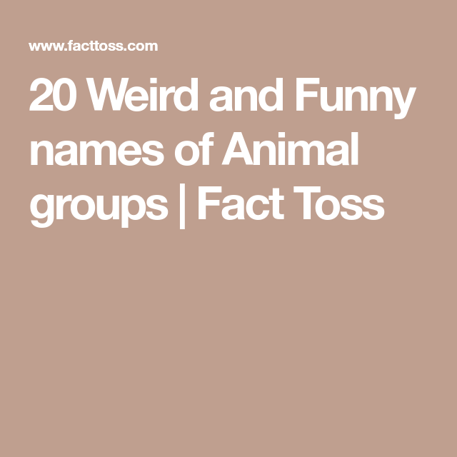 Weird And Funny Names Of Animal Groups Fact Toss