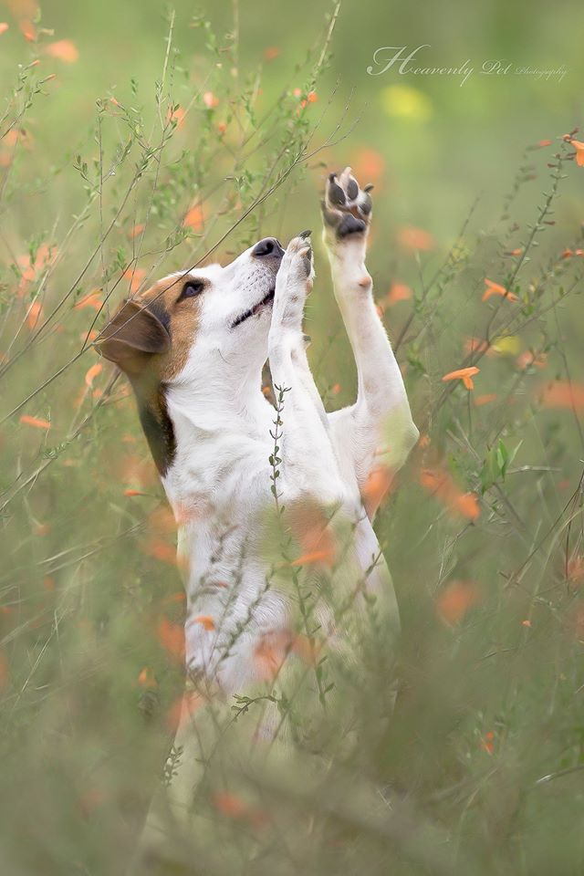 Sun, please come back! Heavenly Pet Photography   Animal