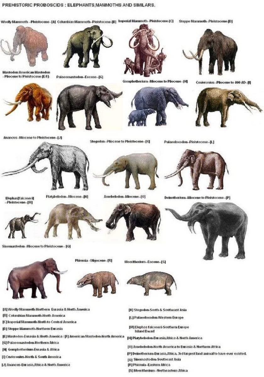Image of: Scary Prehistoric proboscids Pinterest Prehistoric proboscids Prehistoric And Extinct Animals