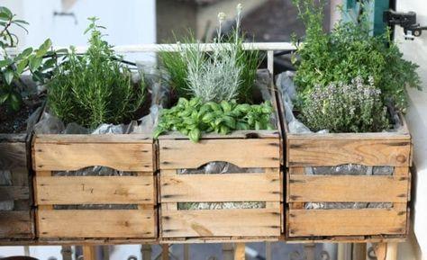 Urban Gardening auf unserem Balkon - HANDMADE Kultur