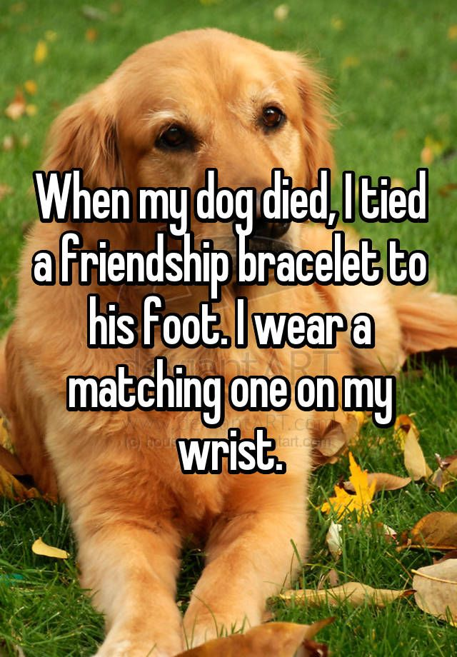 When My Dog Died I Tied A Friendship Bracelet To His Foot I Wear