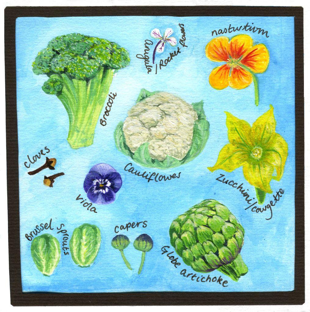 Flowers we eat teaching resource flowers we eat