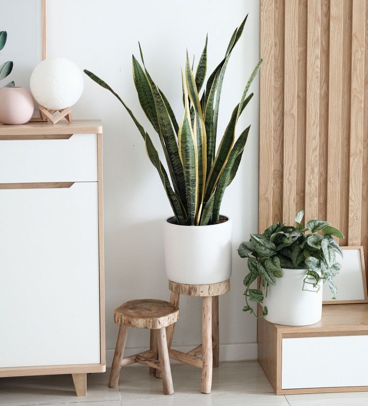 What Are the Good (and Bad) Feng Shui Plants? -   16 plants Office feng shui ideas