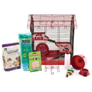 Gerbil Gerbil Small Pets Small Animal Supplies