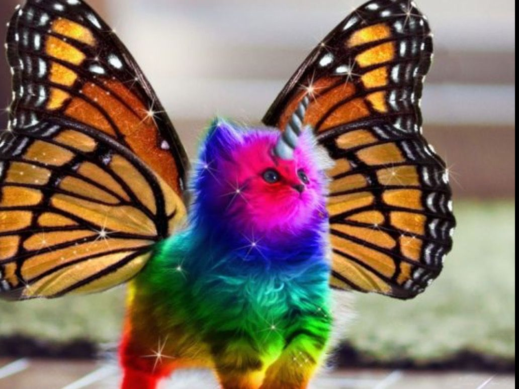 I Wonder If They Are Breeding Cats Like That Rainbow Butterfly Unicorn Kitten Unicorn Memes Rainbow Kittens
