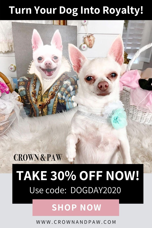 The Sapphire Queen Custom Pet Canvas In 2020 Cute Animal Memes Cute Animals Cute Baby Animals