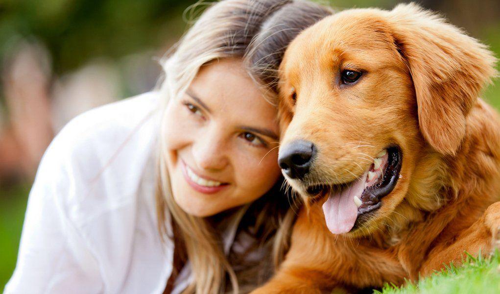 Golden Retriever Breed Profile - Top Dog Tips