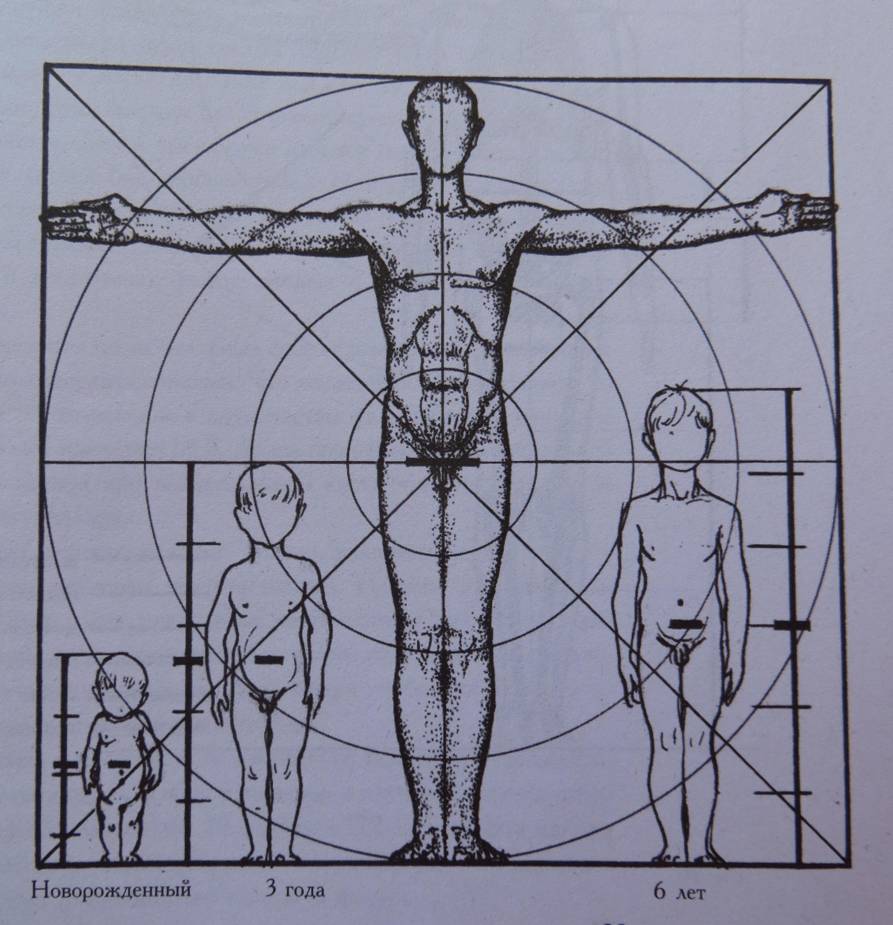 ним описаны пропорции человека относительно головы фото уютного оформления