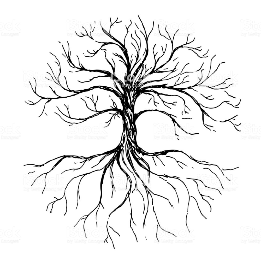 Pin By Siobhan Hutchings On Pictures Of Stuff Ink Illustrations Roots Drawing Tree With Roots Drawing