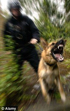 First Picture Of Girl 4 Attacked By Police Dog As She Played In Park Police Dogs K9 Police Dogs Military Dogs