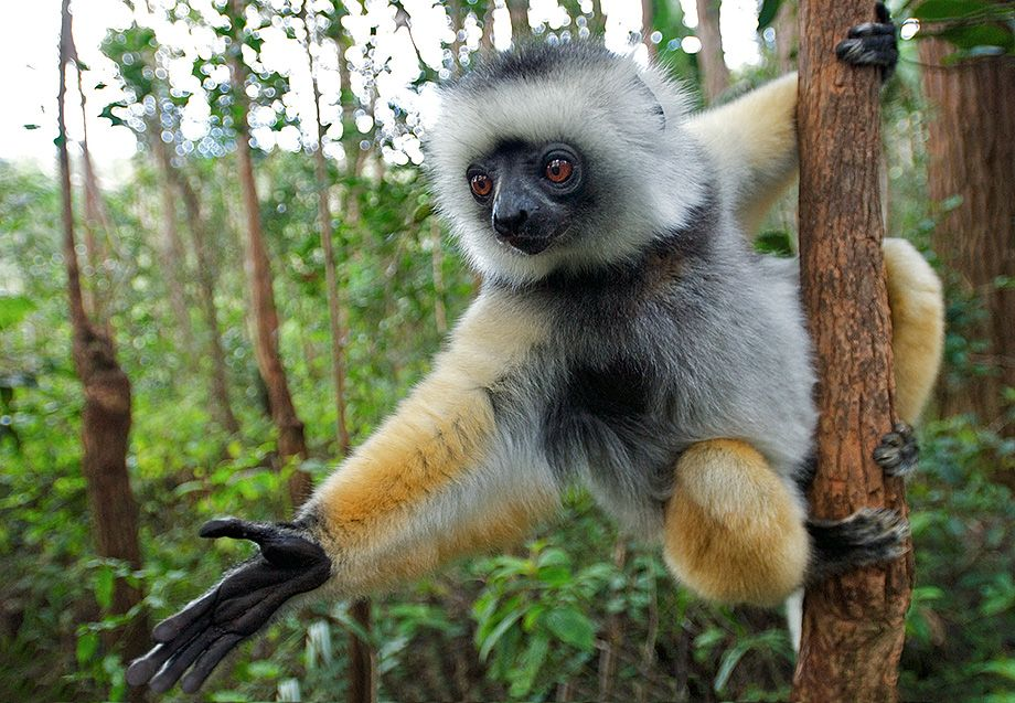 what are the names of the monkeys in madagascar