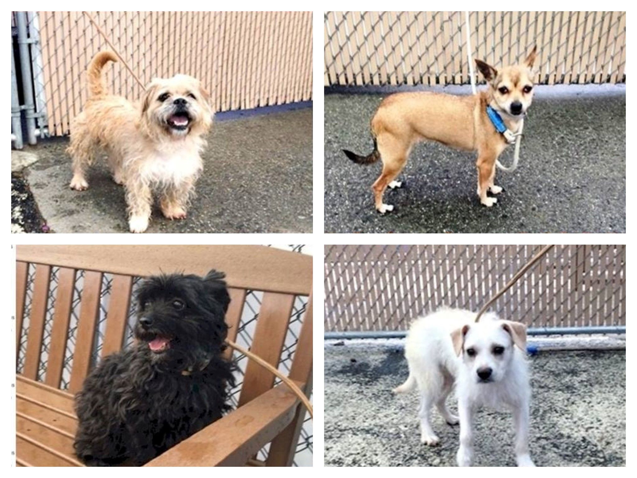Eight Dogs Found Abandoned This Most Adorable Little Gang Of Raggamuffins Was Found Together At Intervate Ave Bronx Ny 10451 A Nyc Dogs Dog Breeds Dogs