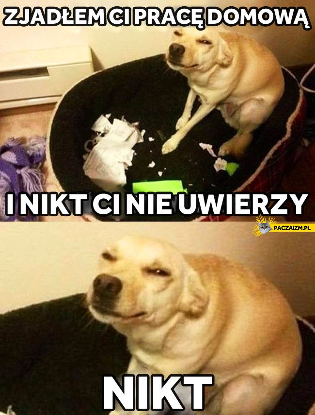 Śmieszne obrazki na Paczaizm.pl - KLIKNIJ!
