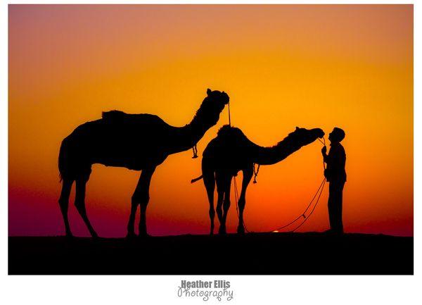 Ride a Camel.